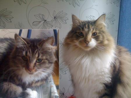 Mina andra husdjur Tuffsan och Aragorn